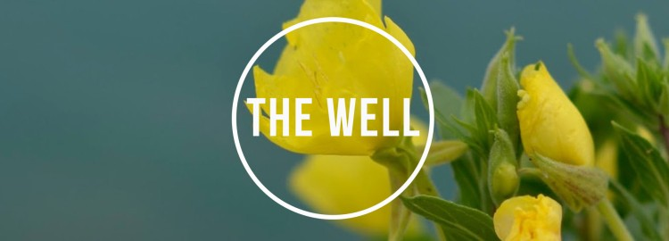 the_well 2017_banner22